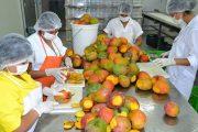 Lista la infraestructura para el funcionamiento de la planta Procesadora de Frutas