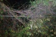 Caída de árbol provoca interrupciones del servicio de energía en sur del Cesar
