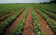Gobierno lanzará la Estrategia 360 Grados para productores del campo