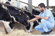 El ICA abrirá convocatoria pública para médicos veterinarios que deseen pertenecer al sistema de autorización