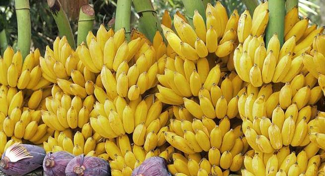 En La Guajira, el ICA trabaja con los productores agrícolas para la competitividad del campo