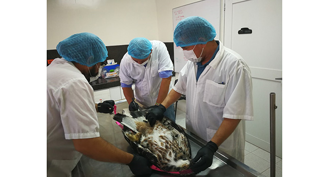 Corpocesar aclara sobre la muerte de un águila