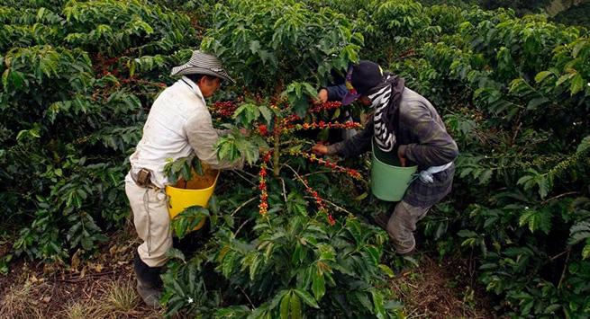 Minagricultura presenta el Boletín Agroclimático con recomendaciones para los productores del campo en abril