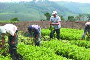 Nueva estrategia para la Encuesta Nacional Agropecuaria