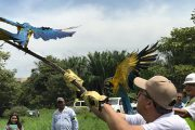 A los bosques del Cesar, regresan 231 aves silvestres