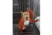 La conciencia de la ciudadanía para dejar libres a sus mascotas