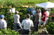 Fontur entregará 14 becas en Valledupar para diplomado de Agroturismo Sostenible