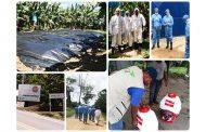 En La Guajira avanzan en el plan de contingencia para atender sospecha de presencia del hongo Fusarium raza 4