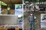 En zona de frontera, incautados más de $ 100 millones en productos agropecuarios de contrabando