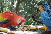 59 especies de fauna silvestre fueron devueltas a su hábitat