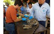 60 personas fueron capacitadas sobre manejo de fauna silvestre con énfasis en neonatos