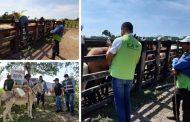 Cerca de 100 équidos han sido vacunados contra la encefalitis equina venezolana, en veredas de Riohacha