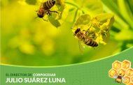 Corpocesar realizará el taller sobre riesgo y precaución ambiental para la supervivencia de agentes polinizadores