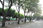 En marcha segunda fase del programa de Arbolado Urbano