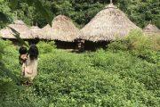 Según el Censo, en Colombia hay 1,9 millones de indígenas
