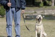 No hay inconvenientes para que discapacitados ingresen con sus perros de asistencia a lugares públicos que restringen mascotas