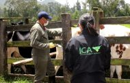 El ICA avanza en la sistematización de sus trámites para mejorar la prestación del servicio a los ganaderos