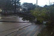 En Valencia de Jesús y Pueblo Bello, caída de árbol afectó servicio de energía