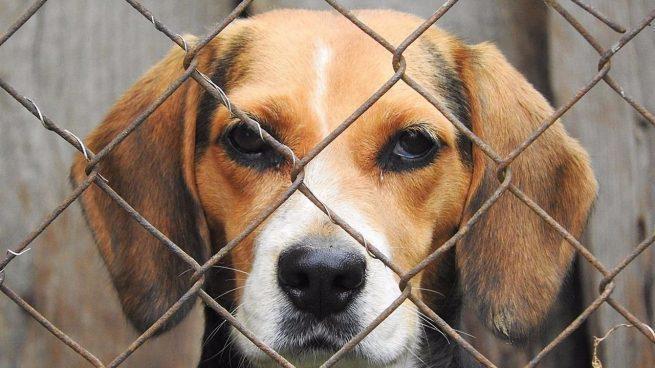 Entra en funcionamiento grupo especial para judicializar casos de maltrato animal