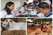El ICA avanza en normalizar la prestación del servicio de expedición de guías sanitarias de movilización animal