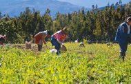 Ecopetrol y la ADR sellan alianza para fortalecer economías locales y promover los desarrollos sociales y ambientales