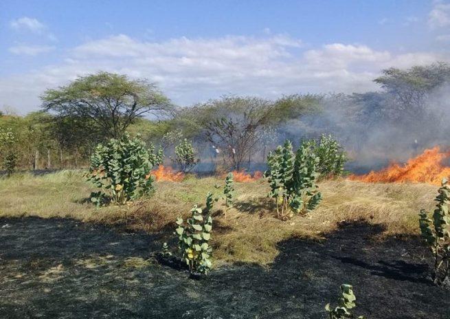 Extremas medidas de prevención ante riesgo de incendios forestales y accidentes por fuertes vientos en La Guajira