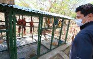 El llamado de Corpocesar a denunciar tráfico de especies silvestres