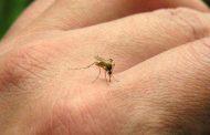 El dengue uno de los 13 desafíos que amenazan la salud del planeta
