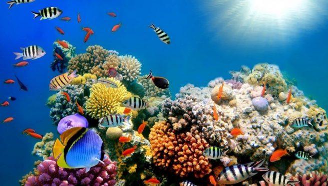 Estudio revela deterioro de salud del arrecife mesoamericano