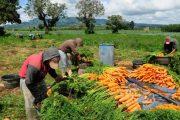 Precios mundiales de los alimentos suben por cuarto mes consecutivo: FAO
