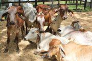 Se abrió el primer paso para la reapertura total del mercado de carne bovina colombiana a Rusia