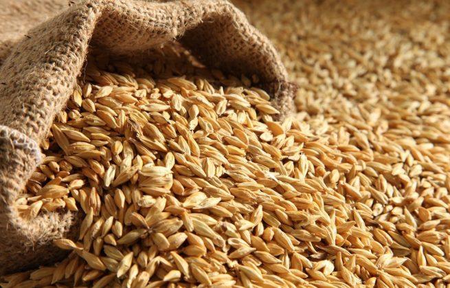 Qué propiedades y beneficios tiene la cebada