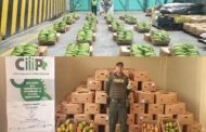En zona de frontera, incautan cerca de 80 millones de pesos en productos agropecuarios