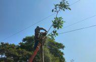 Caída de árbol sobre línea afectó servicio de energía en Curumaní y Chiriguaná