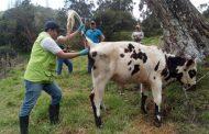 Harán muestreo de vigilancia en predios ganaderos para mantener el estatus de país libre de fiebre aftosa con vacunación
