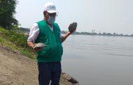 Liberan 15 hicoteas en el río Magdalena