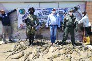 En vías de Cesar decomisaron 107 iguanas