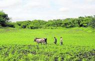 Minagricultura y BanAgrario ponen en marcha estrategias para beneficiar financieramente a pequeños y medianos productores