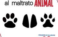 Personería Municipal adelanta campaña en contra del maltrato animal en Valledupar