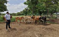 Aprobado Plan Departamental de Extensión Agropecuaria - PDEA Cesar