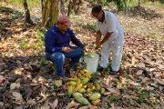 Venta de cacao Premium a la Compañía Nacional de Chocolates, el emprendimiento de mujer que recuperó su predio