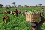 El precio de los alimentos básicos, expuesto a una