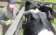 En Colombia han vacunado 27,3 millones de animales contra la fiebre aftosa