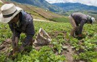 Piden informe sobre la construcción de la política pública para garantizar derechos de los campesinos