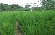 Pequeños y medianos productores de comunidades negras, afrocolombianas, raizales y palenqueras tienen línea especial de crédito