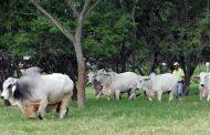 En su día, gobierno del Cesar les reitera su apoyo a los ganaderos de la región