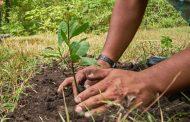 Corpocesar lanza campaña para crear cultura ambiental sostenible en la comunidad