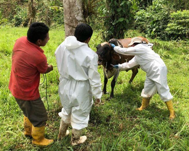 El ICA abre convocatoria pública para médicos veterinarios y médicos veterinarios zootecnistas