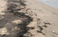 Corpoguajira evalúa posibles causas de mortandad de peces en costas de Manaure
