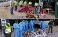 Material vegetal fue destruido en el Cesar por no cumplir con la normatividad fitosanitaria